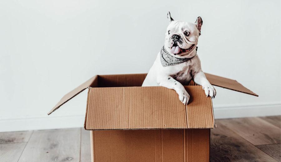 Afbeelding voor Wat kan je doen bij een vermoedelijk vermist pakket?